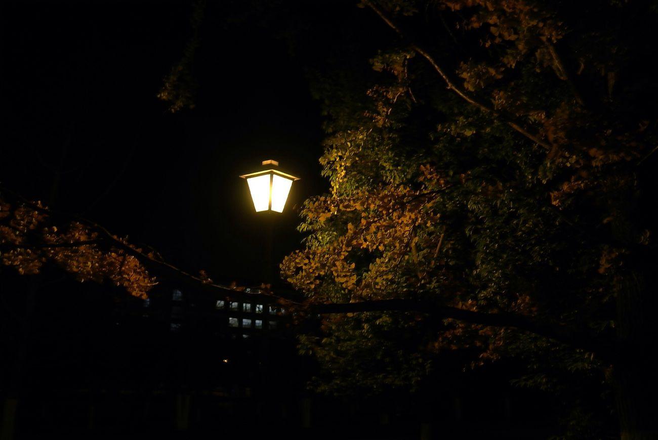 漂亮的路灯,是暗夜的眼睛 城中寻城