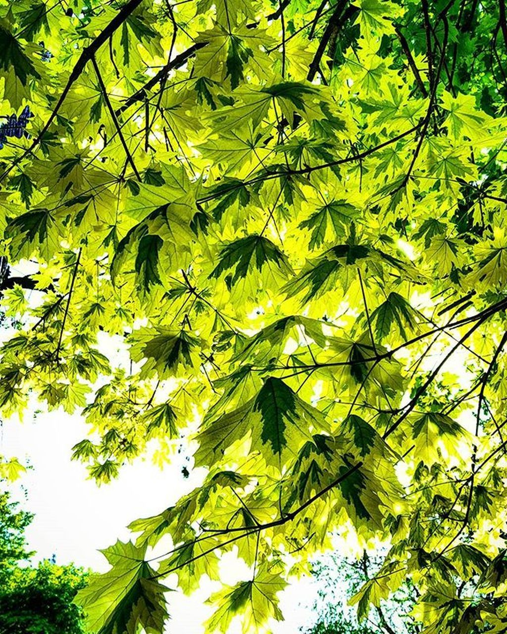 leaves, green, nature, growth, leaf, foliage, green color, tree, day, beauty in nature, outdoors, branch, no people