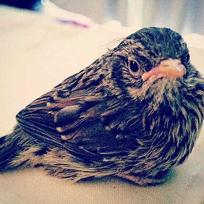 Injured Bird Rescued Set Free Beak One Animal Close-up Focus On Foreground No People Nature Photography