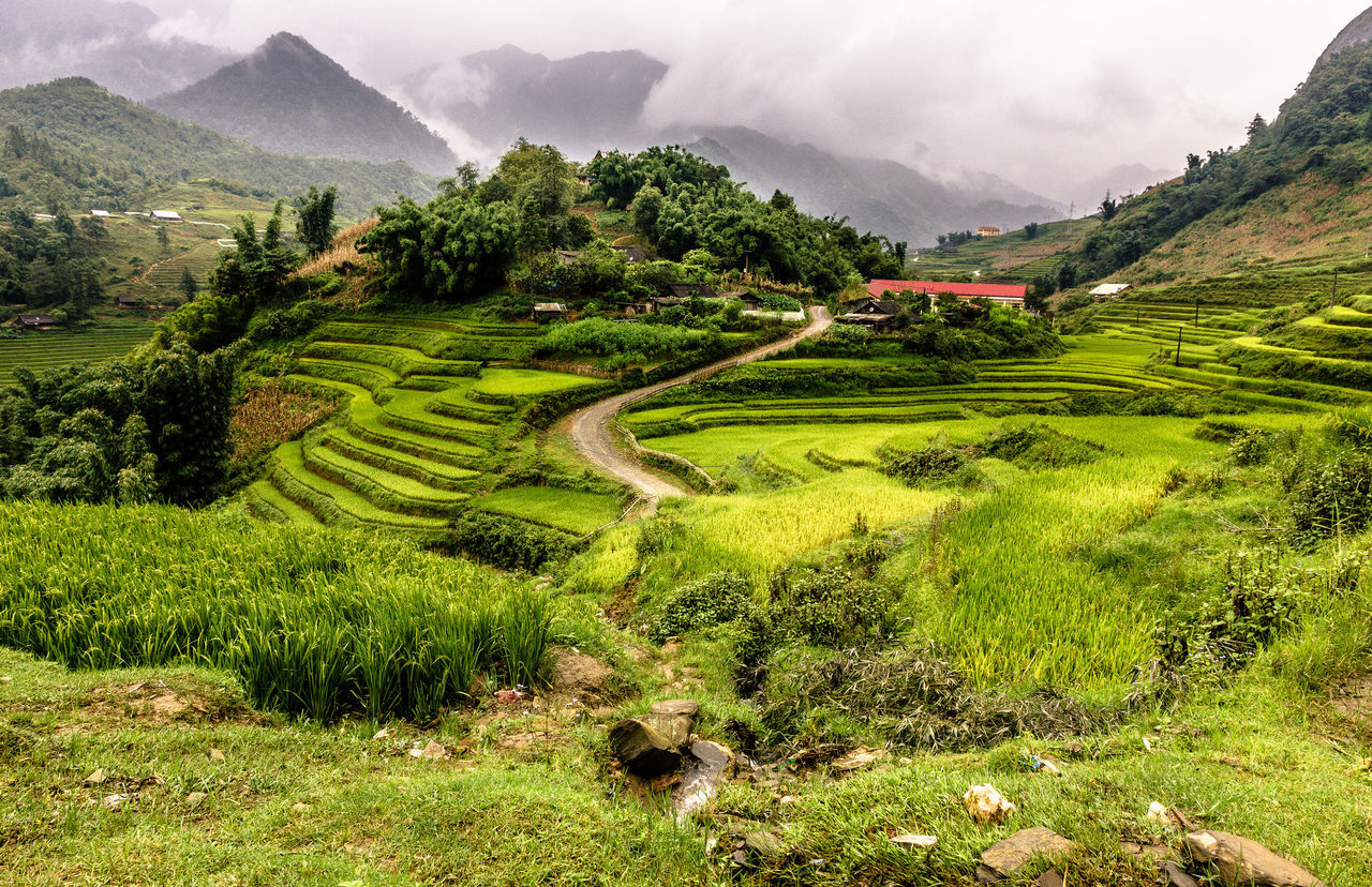Agriculture Beauty In Nature Cloud - Sky Day Field Grass Green Color Growth Landscape Mountain Mountain Range Nature No People Outdoors Rice Paddy Scenics Sky Terraced Field Tranquil Scene Tranquility Tree