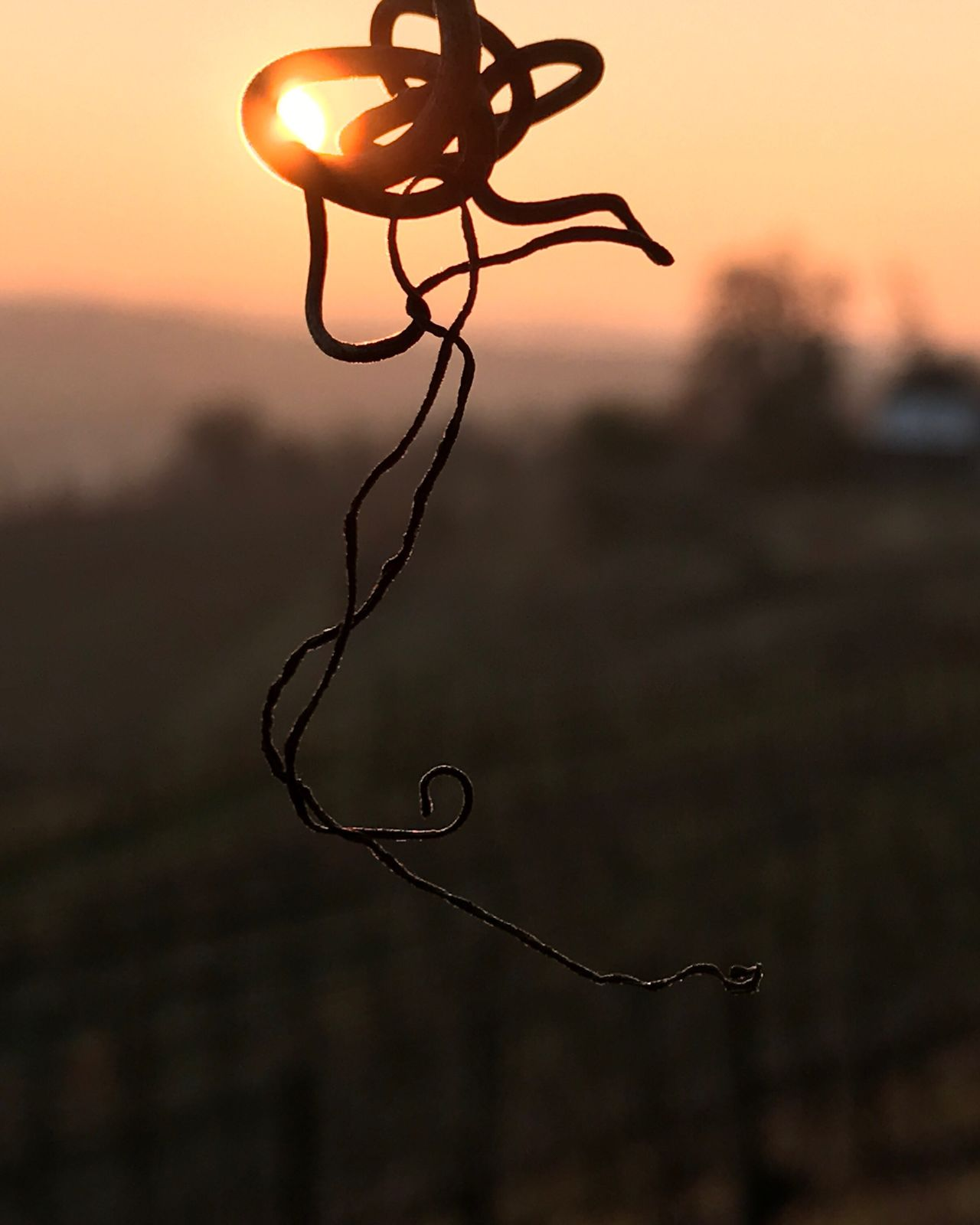 Vignes Jurançon Monein Sunset No People Nature Outdoors Beauty In Nature