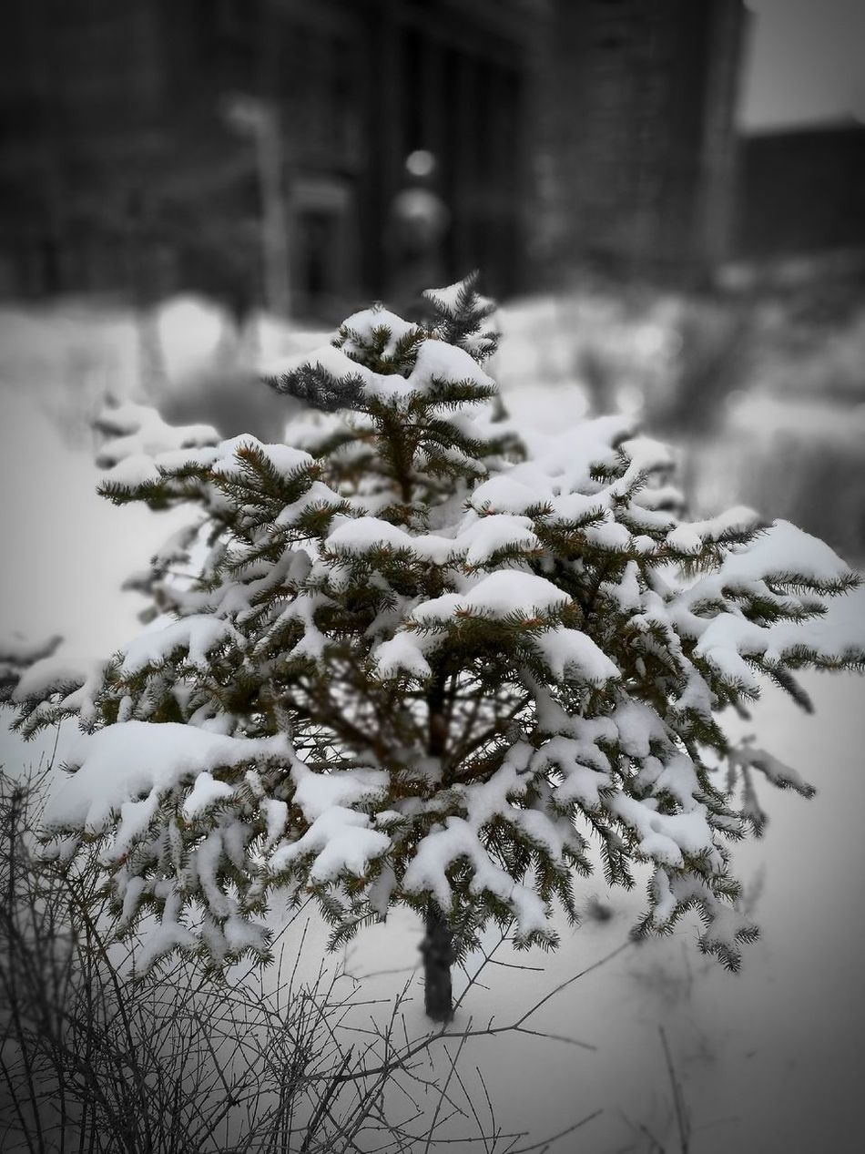 ❄ Outdoors Nature HuaweiP9 Phone Photography Life