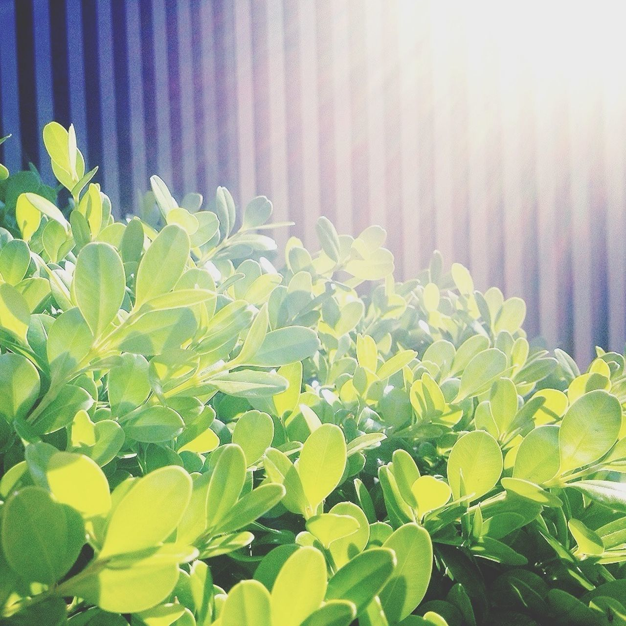 leaf, growth, green color, plant, sunlight, no people, outdoors, day, nature, freshness, close-up, beauty in nature, fragility