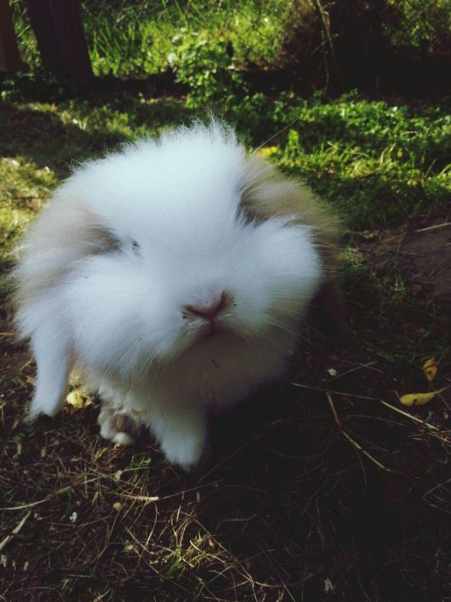 It's So Fluffy I'm Gonna Die! ♥