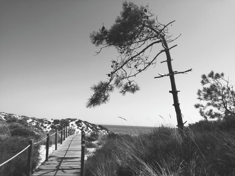 Monochrome Photography Tree Outdoors Tranquil Scene Non-urban Scene Tranquility