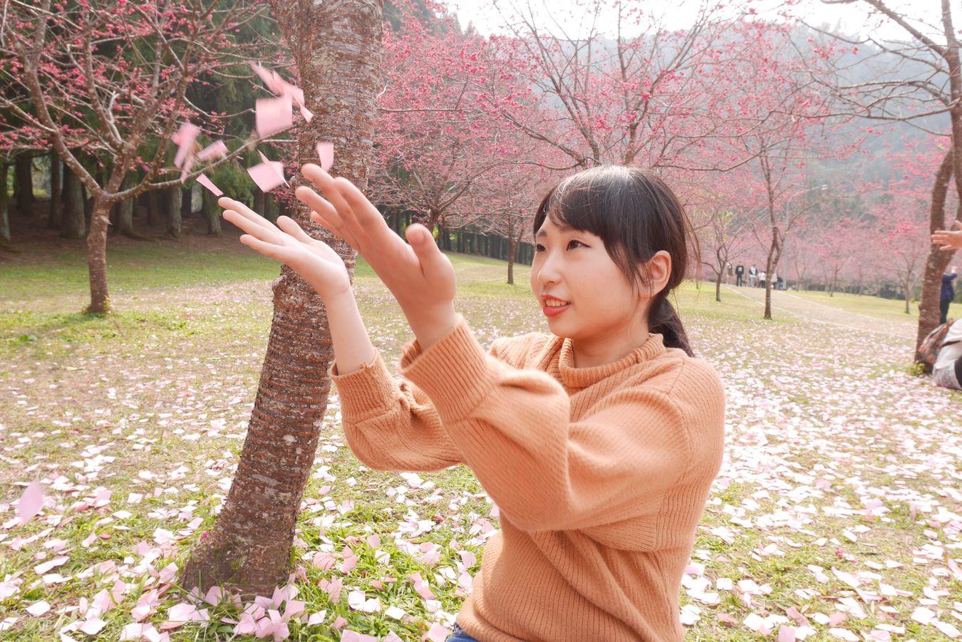 九族文化村 櫻花季