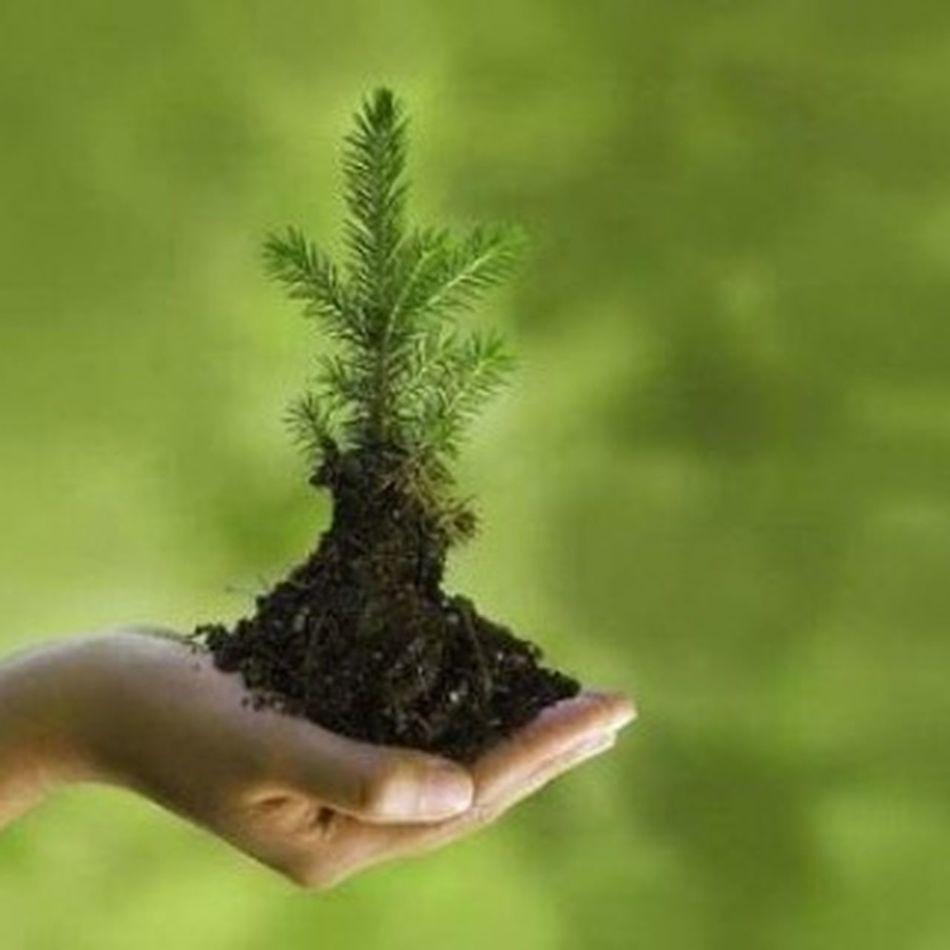 bayangkan 1 tahun kita tebang 1 pohon, 2 tahun 2 pohon, 100 tahun 100 pohon,, itu baru 1 pohon/tahun, bagaimana kalau 5/6/7/8/9 atau 100 pohon/tahun,, sepertinya sudah dipastikan tidak akan ada hutan untuk anak cucu kita kelak, entah darimana juga mereka mendapatkan oksigen demi bernafas bertahan hidup,, Ayo teman sadarlah dari sekarang untuk anak cucu,kita nanti Sekarang memang masi sedikit dampak nya tpi liat ntar Tanam lah pohon walaupun hanya 1 . Cintaindonesia Gogreen Pohon Hijau Oksigen Masadepan Pencintaalam Green ALaM Like Dunia Loveindonesia Anakindonesia Keindahanalam