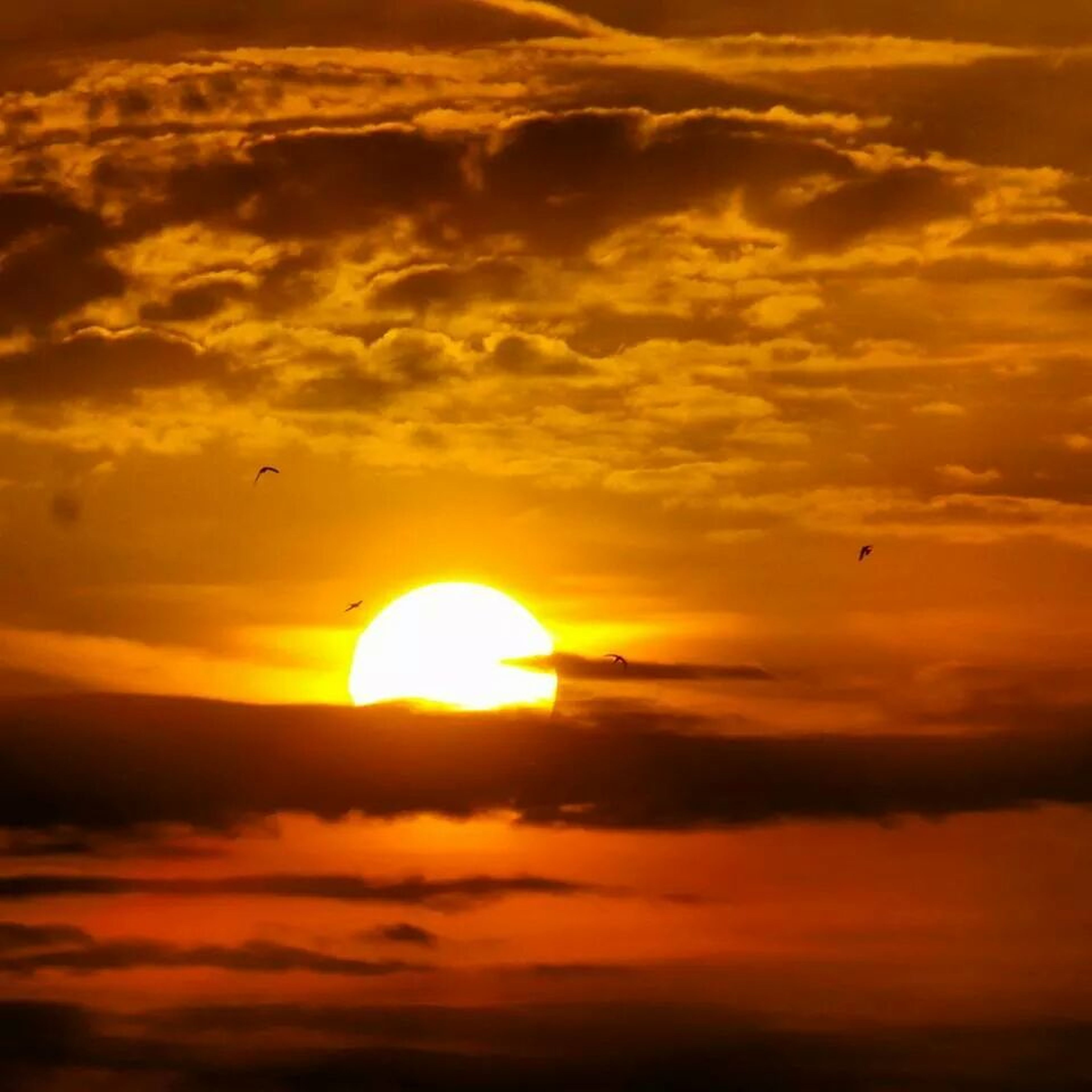 sunset, flying, orange color, sky, sun, cloud - sky, beauty in nature, scenics, mid-air, silhouette, tranquility, tranquil scene, bird, nature, cloud, idyllic, low angle view, cloudy, animal themes, dramatic sky
