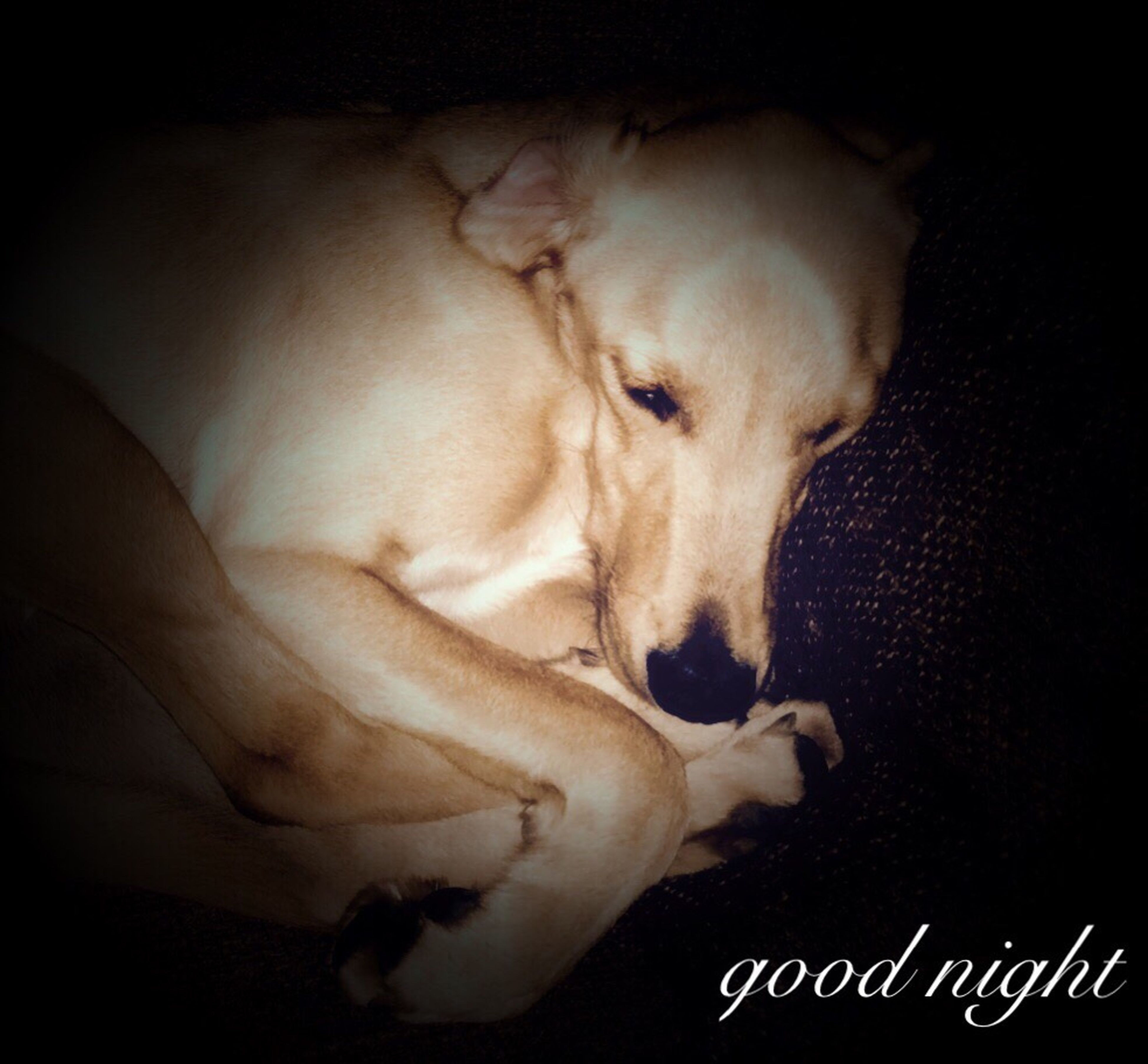 indoors, domestic animals, animal themes, one animal, pets, dog, mammal, relaxation, lying down, sleeping, resting, close-up, bed, home interior, part of, person, eyes closed, sofa