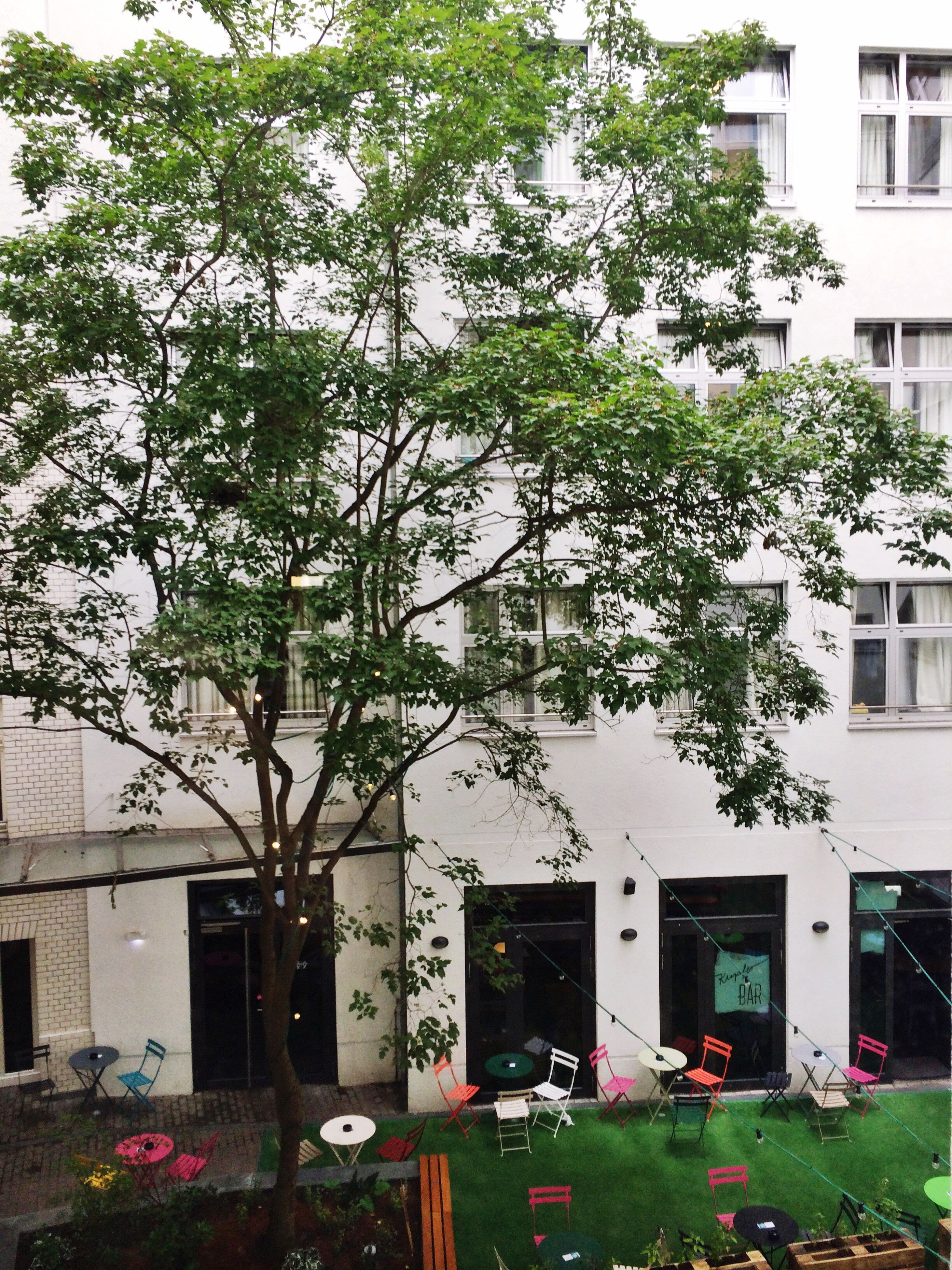 building exterior, architecture, built structure, tree, residential building, residential structure, growth, plant, building, city, front or back yard, day, outdoors, no people, nature, green color, facade, growing, apartment, parked, stationary, city life
