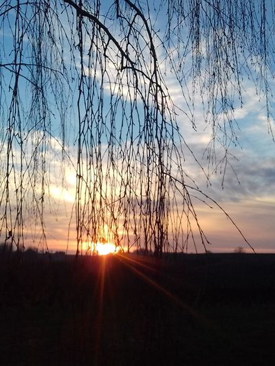 Sky Sunset Beauty In Nature Tranquil Scene Nature Sunlight Outdoors Tree Scenics Landscape Bare Tree Rural Scene Cold Temperature No People