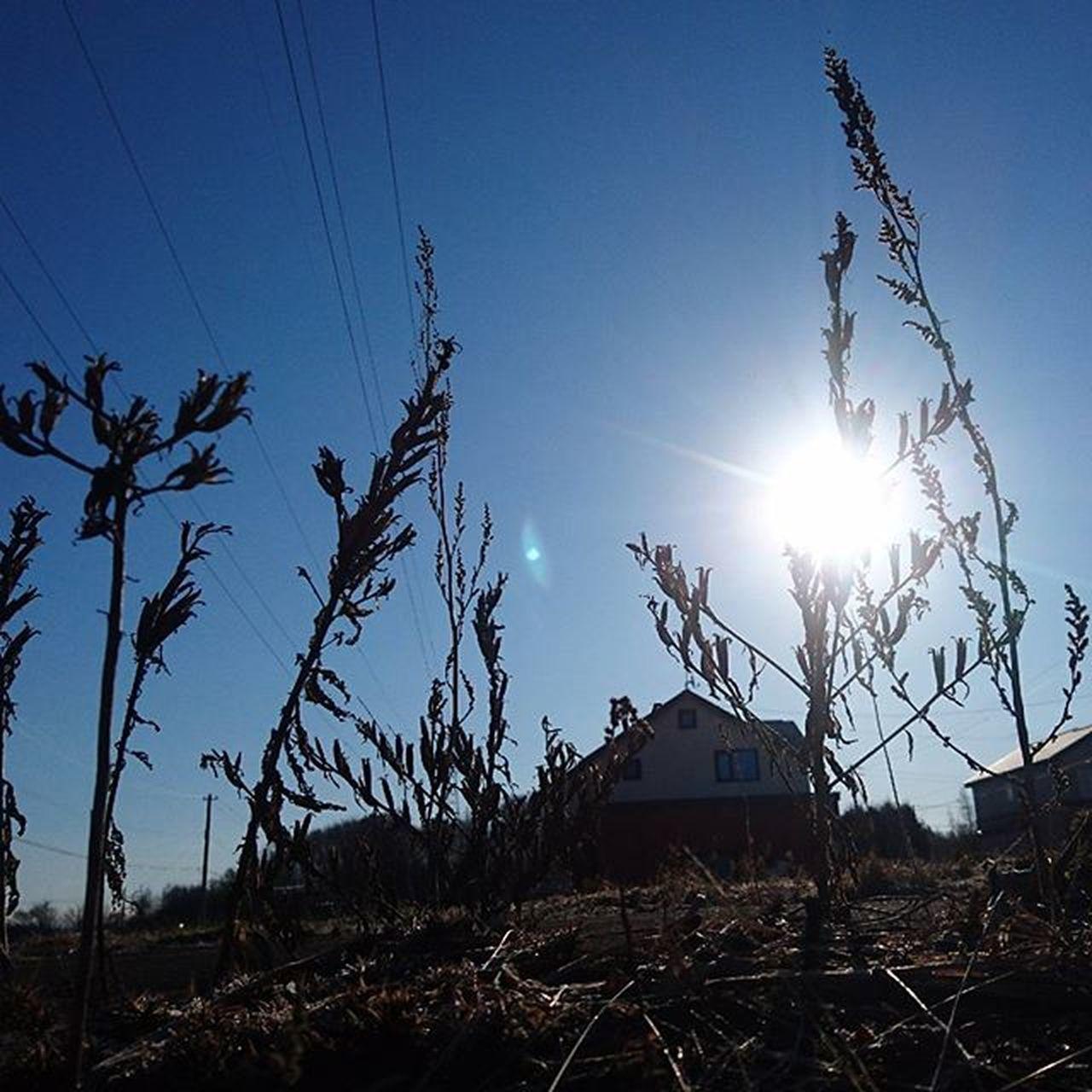 なおphoto 朝陽🌅 枯れ草 おはようございます(๑´ㅂ`๑)☀ 今週もゆるりとよろしくねぇ( ´͈౪`͈ )