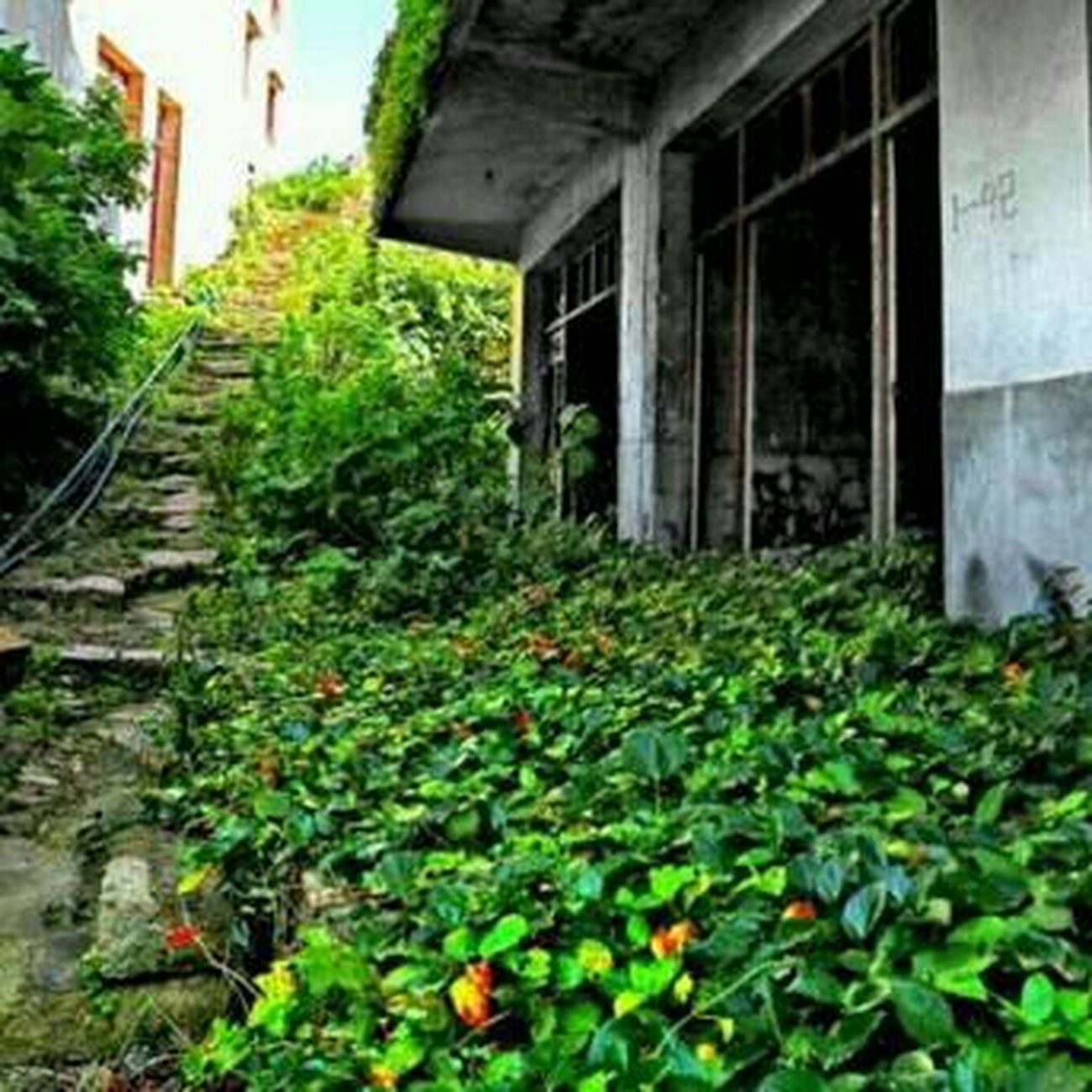 Taking Photos Nature Huggingatree  Sabzevar