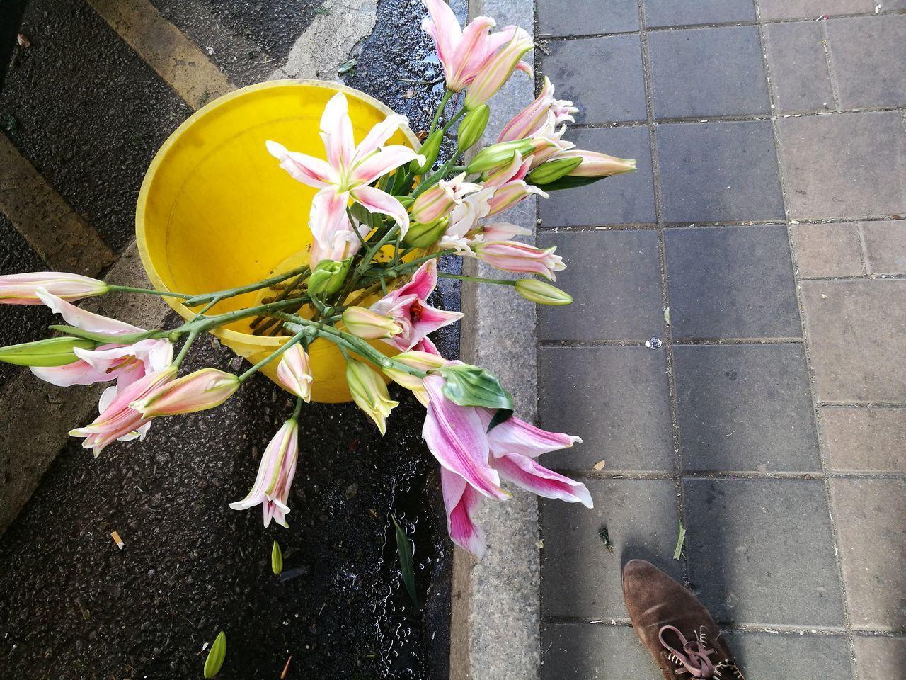 A foot in the flower market... Petal Freshness Flower Head Outdoors Fragility Flower Lilies Lilies In Bloom Pink Flower Pink Flower Market Mongkok HongKong Flowerporn Yellow And Pink Flora Human Body Part Human Foot