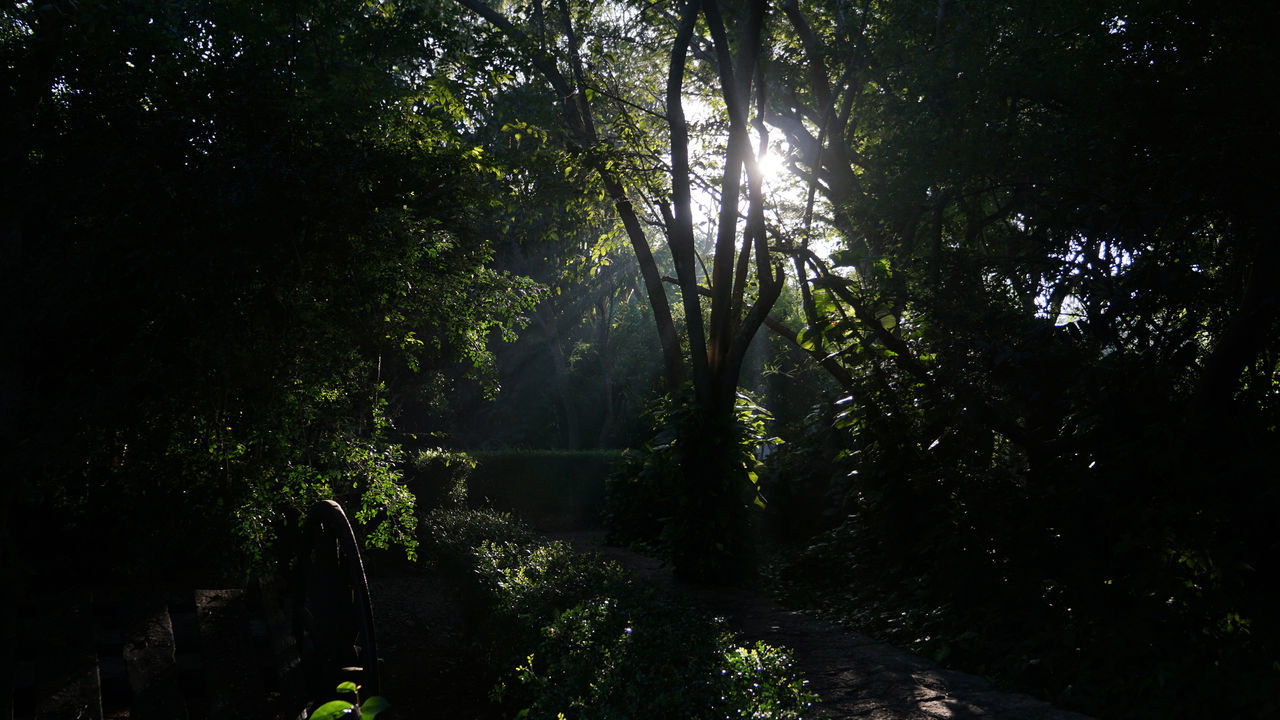 Beauty In Nature Forest Nature No People Outdoors Sunlight Travel Tree Tropical Climate Tropical Plants Yucatan Mexico