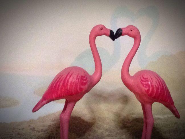Flamingo Flaming_rust Flamingos Flaming_abstracts Love Lovely Love ♥ Lovelovelove