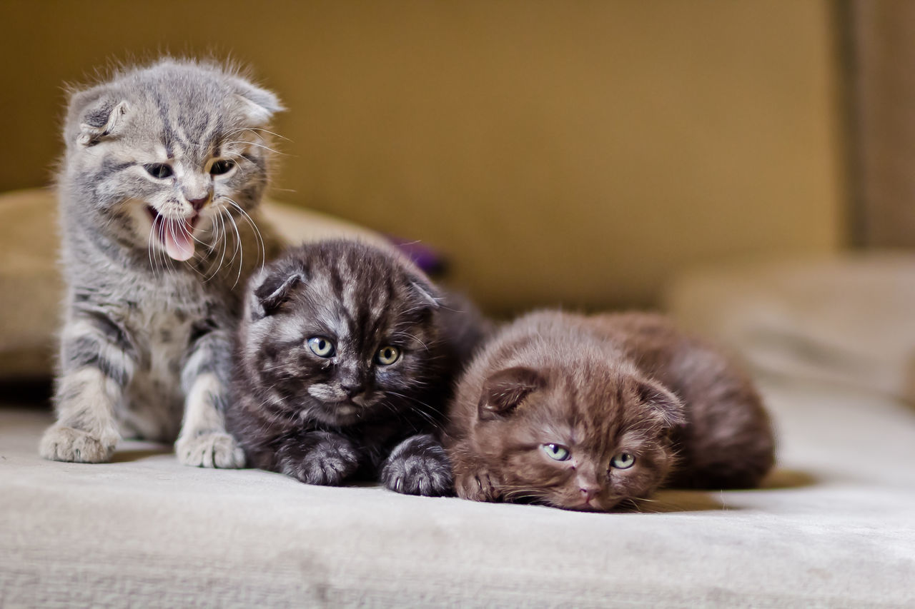 Animal Themes Close-up Cute Domestic Animals Domestic Cat Feline Kitten Looking At Camera Lying Down Mammal Pets Portrait Relaxation Sitting Togetherness Young Animal EyeEm Selects