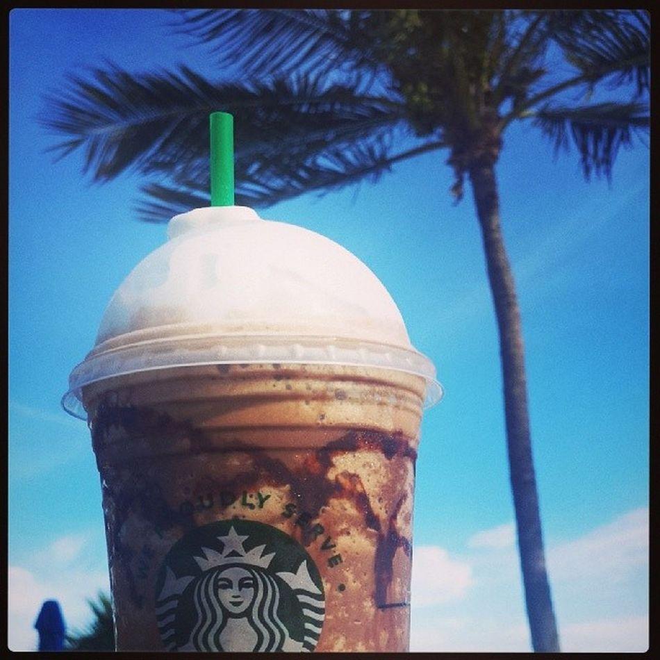 Mocha Frappucino Starbucks Palmtree Florida