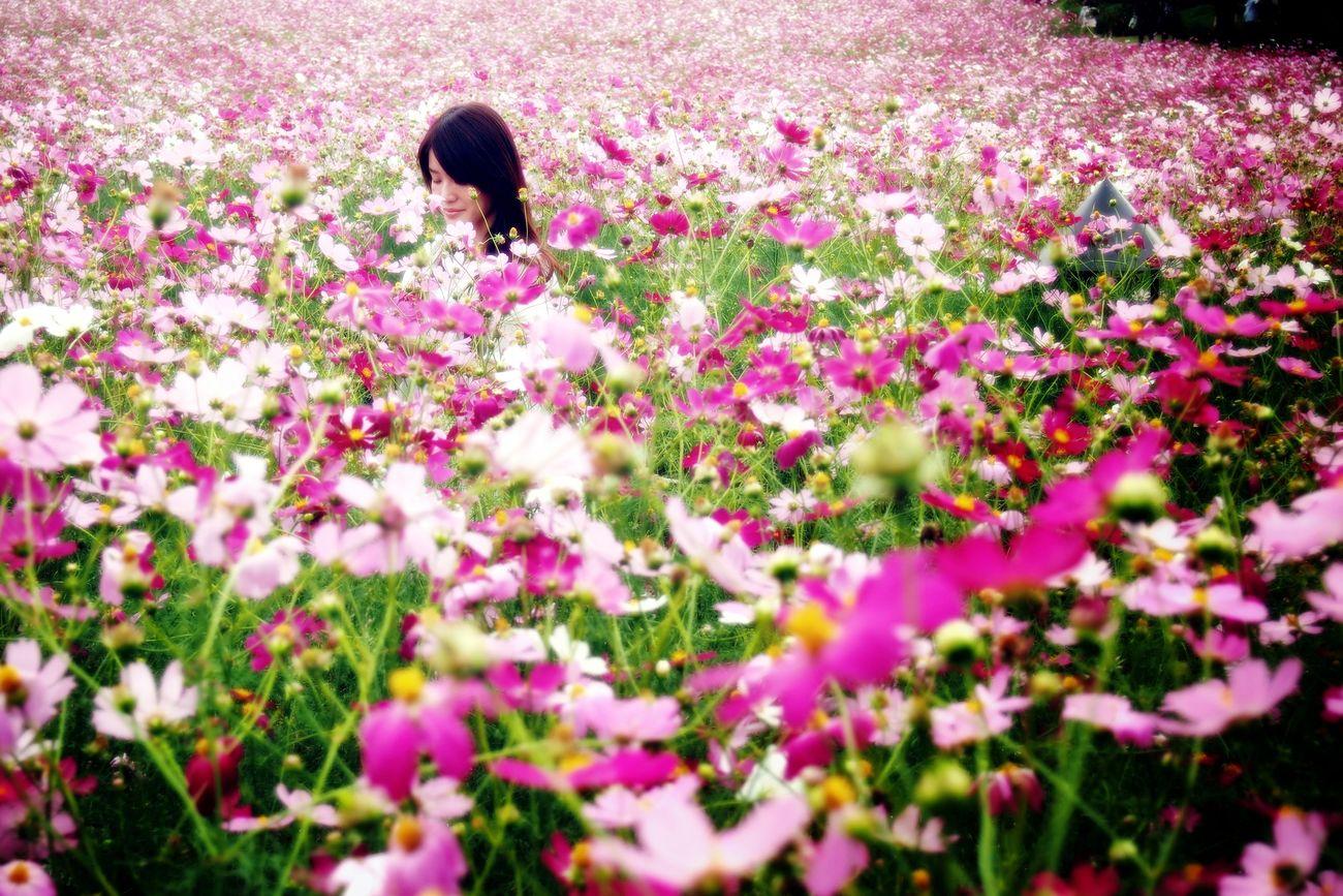 愛と調和 Cosmos EyeEm Flower Flowers Olympus Olympus E-P3 EyeEm Best Shots EyeEm Nature Lover 秋桜 コスモス Portrait Of A Friend