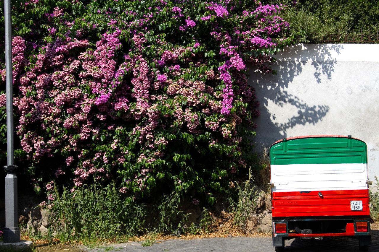 Attimi di vita ordinaria Rome, Italy Roma Tricolore Outdoors Apecar Glicineinfiore Glicine Beauty In Nature