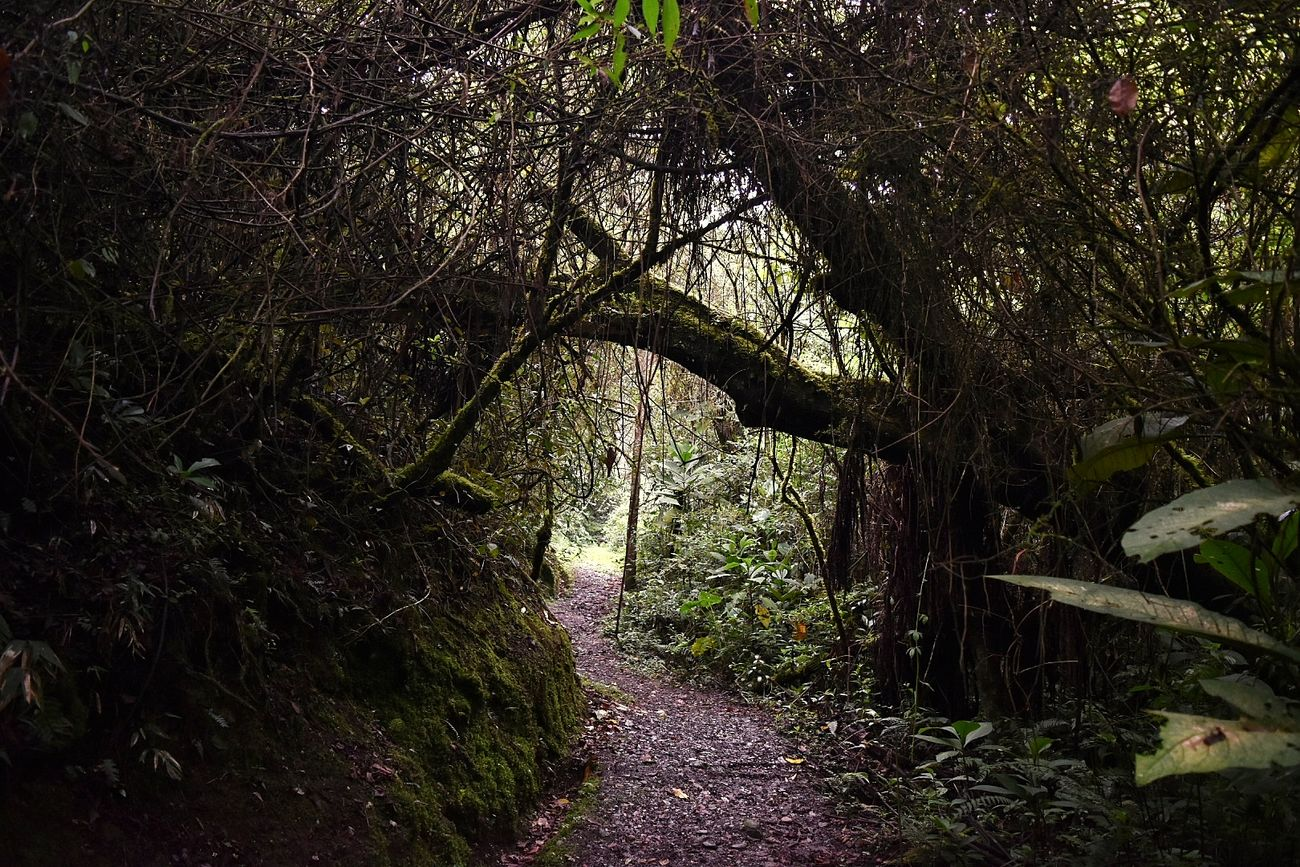 Tree Nature No People Travel Destinations Walking Amazing Place