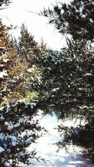 Winter in my backyard Texas Crazy Weather First Eyeem Photo