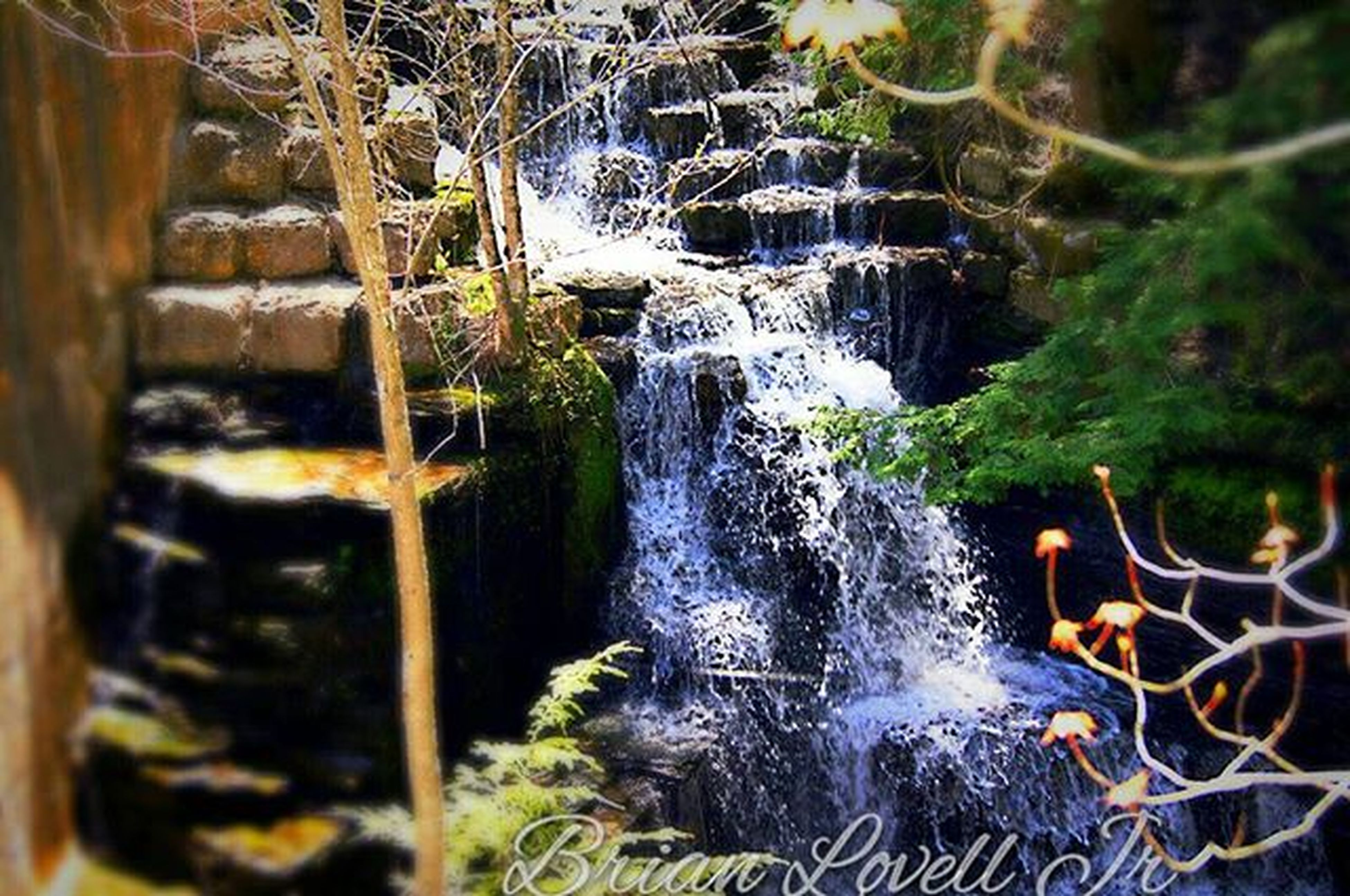 water, motion, flowing water, plant, long exposure, rock - object, waterfall, nature, flowing, forest, close-up, growth, splashing, outdoors, beauty in nature, day, no people, falling, selective focus, leaf