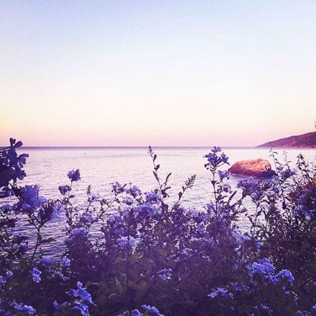 Στον παράδεισο. Ikariaa Myisland Purpleflowers Heavenplace Amazingview Myviewrightnow Breathtaking Sky Morning Gmorningpeople Summertime Summermood Summerishere Loveisallaroundus Befreeasabird Andshareyourlove 😚