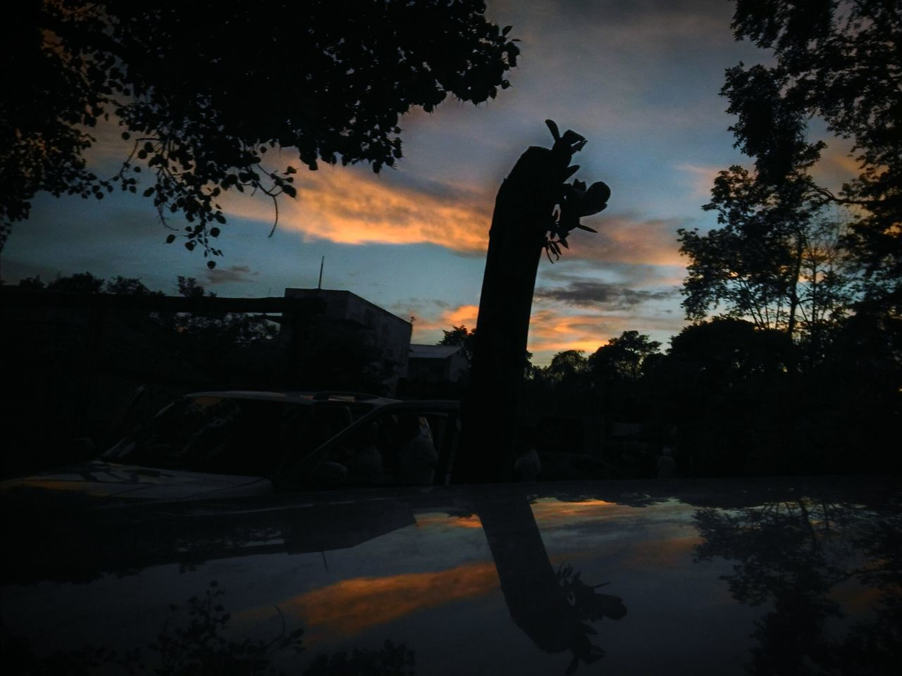 silhouette, tree, sunset, sky, reflection, water, no people, cloud - sky, nature, outdoors, beauty in nature, day