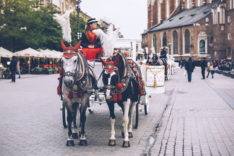 Traditional horse carriage waiting for passengers on Krakow's main market square. Architecture Attraction Building Exterior Built Structure Carriage City Day Domestic Animals Historic Horse Horse Carriage Horse Drawn Carriage Incidental People Krakow Old Town Outdoors People Poland Real People Rynek Rynek Główny Square Tourism Transportation