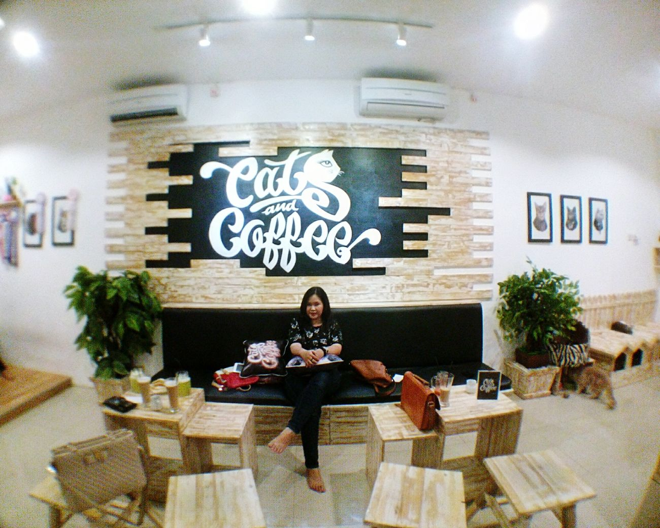Hangout Cafecats