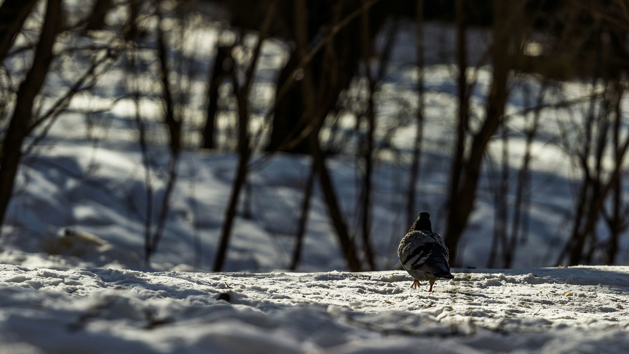 Bird On Snow Covered Field