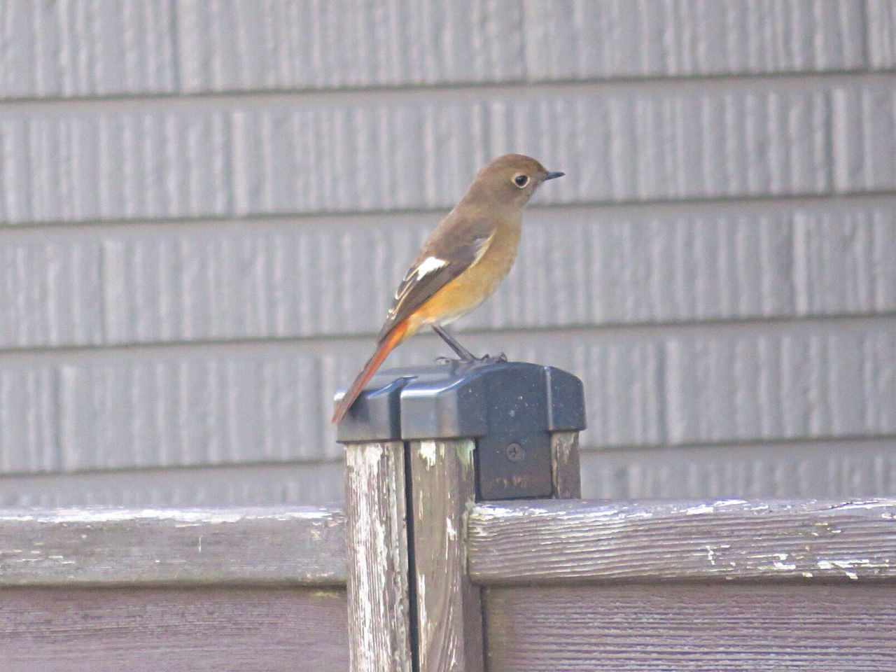 perching, bird, one animal, animals in the wild, animal themes, animal wildlife, outdoors, day, wood - material, no people, close-up, nature