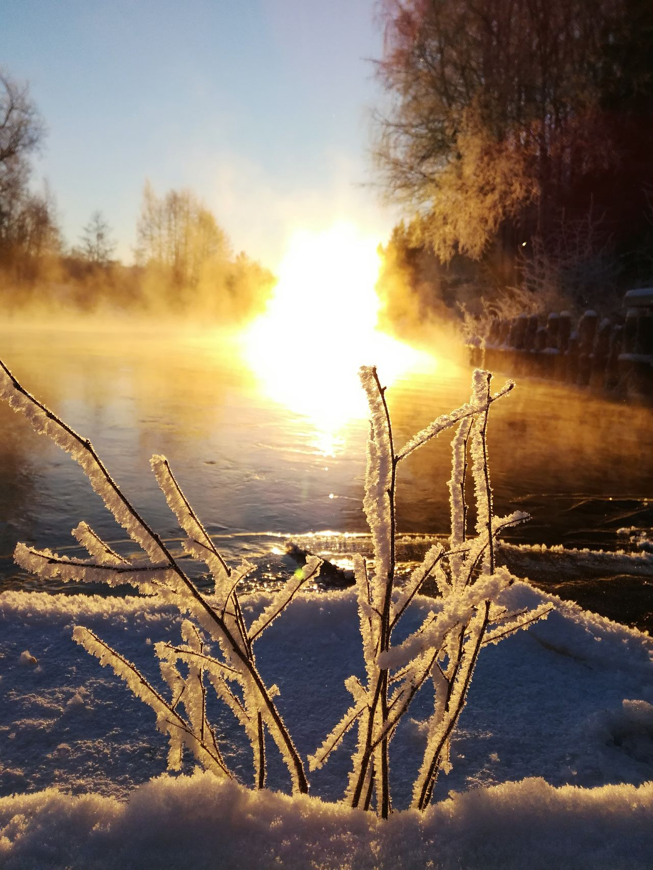 Cold Temperature Winter Landscape Snow Nature Sunrise Beauty In Nature Frozen Tree Sunlight No People Sun Outdoors Ice Water Sky Morning Early Morning Korkeakoski Finland Steam Selective Focus Light And Shadow Branches Kotka, Finland