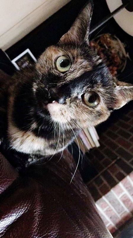 Nellie Kitty Filter