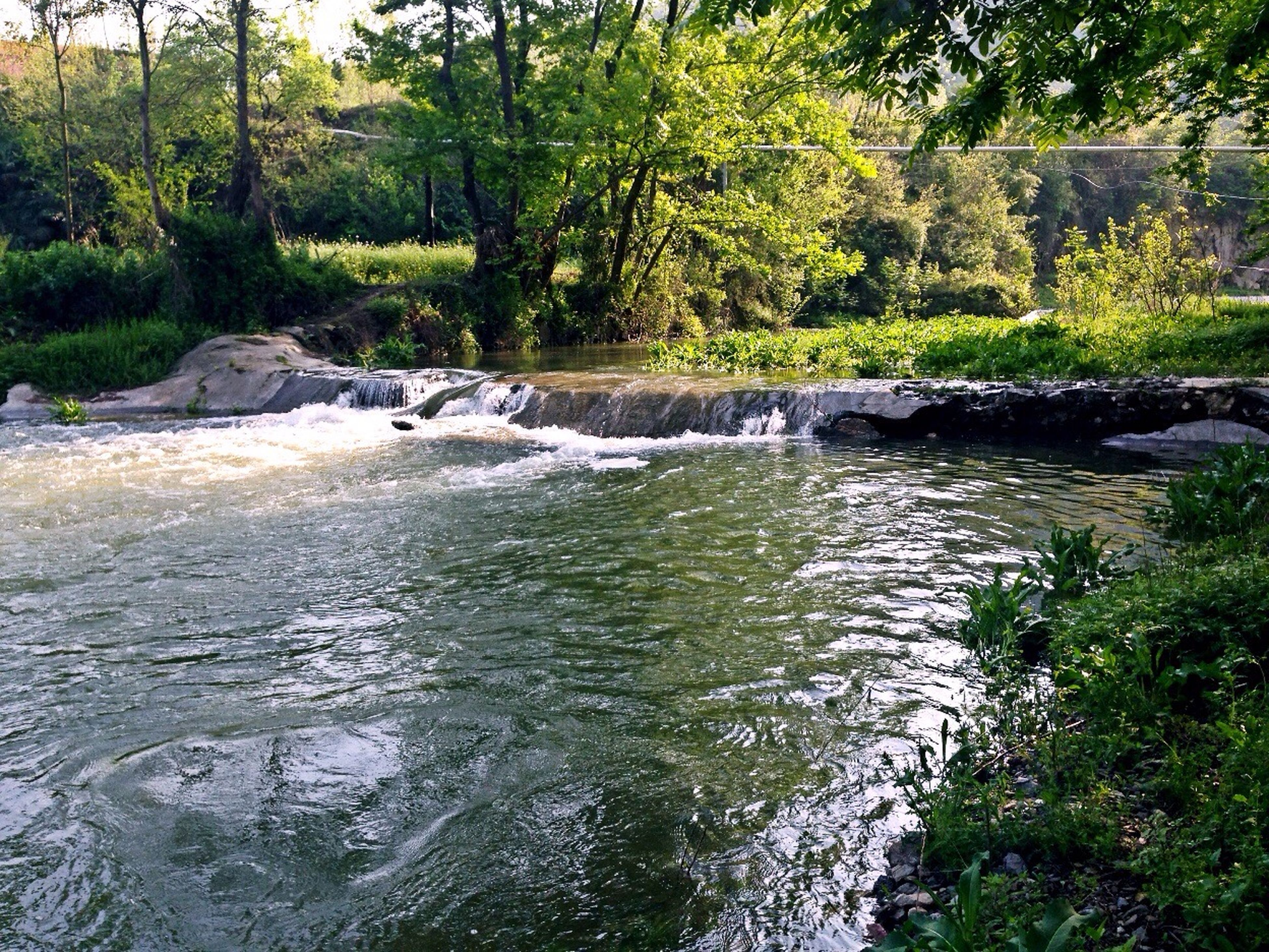 water, forest, tree, stream, flowing water, waterfront, nature, beauty in nature, flowing, scenics, tranquility, river, motion, tranquil scene, rippled, green color, idyllic, rock - object, growth, day