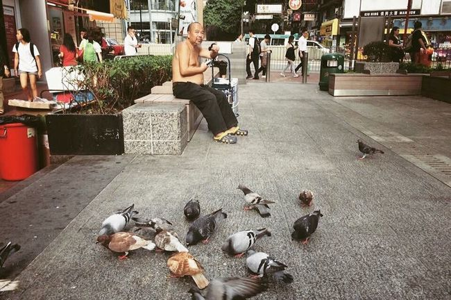 Found On The Roll Pigeons Oldman Life