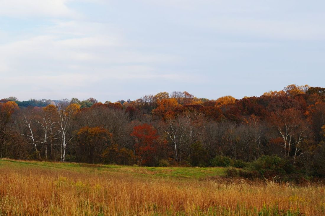 Hanging Out Fall Colors Colour Splash Fall Beauty Fall_collection Trees Bright_and_bold Grassland Tree Dry Tree