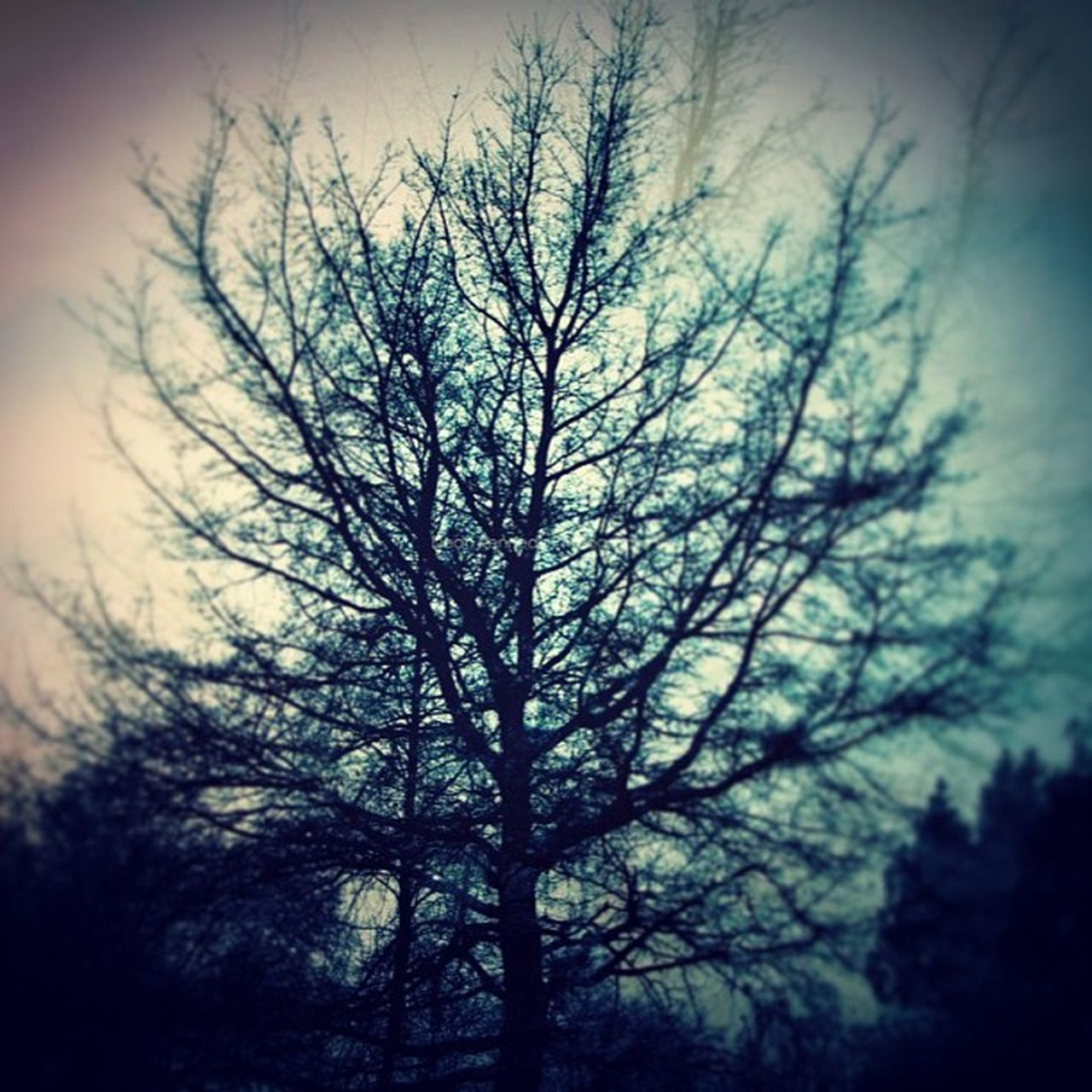 nature, tree, bare tree, tranquility, beauty in nature, forest, no people, outdoors, sky, branch, landscape, day