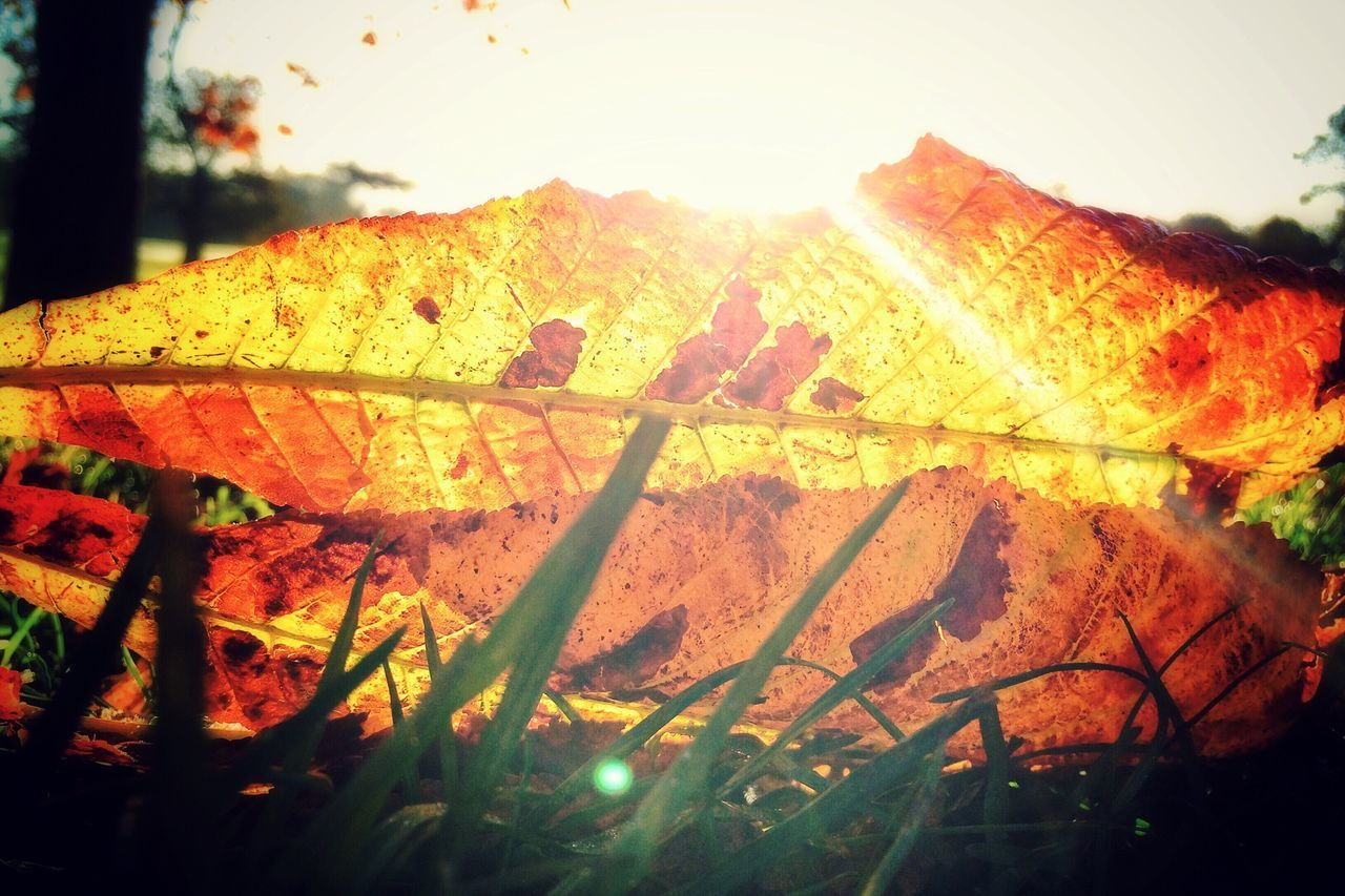 Lots of autumny sunrisey pics. Will try and vary it up a bit soon. Sunrise Autumn Autumn Leaves Colors Of Autumn