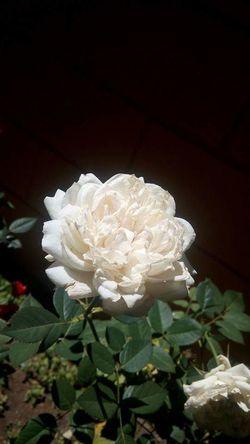 hace mucho tiempo que no tomaba fotos de flores esta esta que mas me gusta por el momento 😊