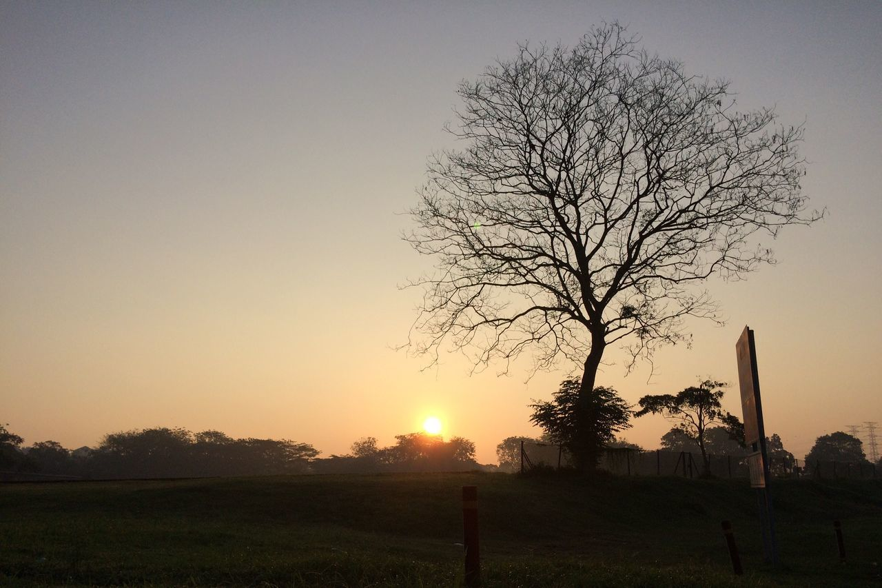 Tree Bare Tree Nature Field Sunset Beauty In Nature No People Tranquility Clear Sky Outdoors Rural Scene Scenics Tranquil Scene Landscape Grass Sun Sky Day Sunrise Sunrise_Collection Sunset Silhouettes Sunrise_sunsets_aroundworld Sunrise Silhouette