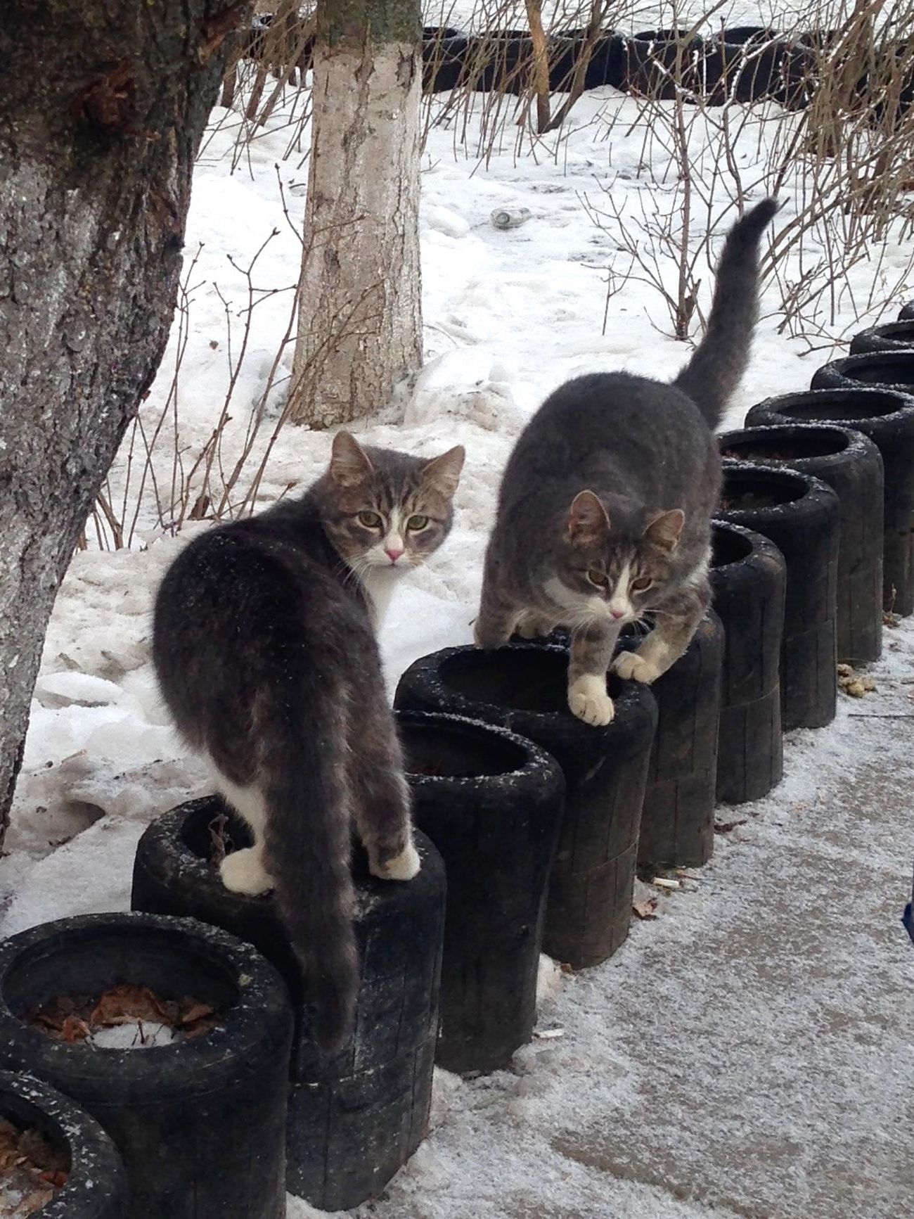 Коты котэ кот Cat Cats Cat♡ Homeless Cats