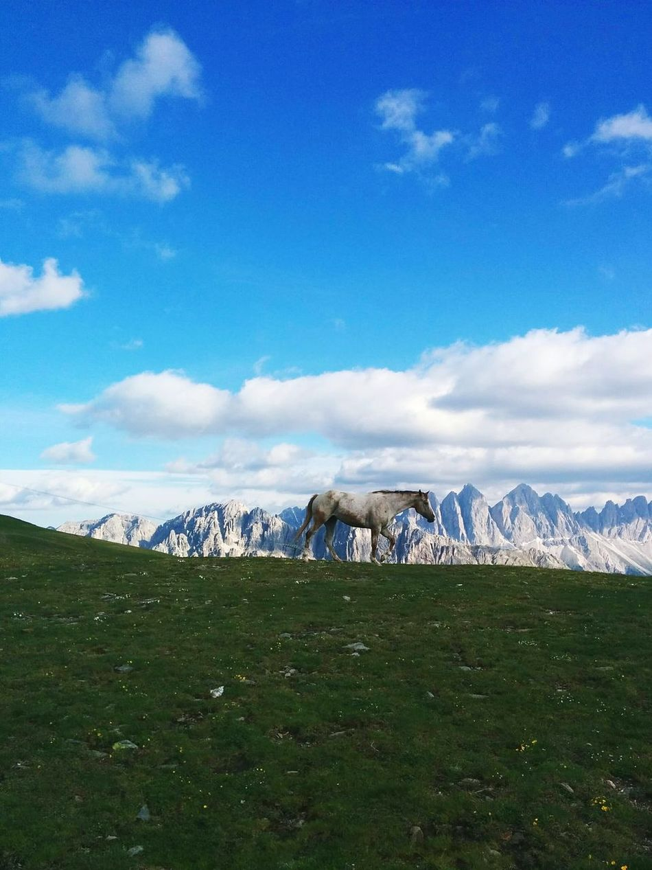 The Great Outdoors - 2015 EyeEm Awards The Traveler - 2015 EyeEm Awards The Moment - 2015 EyeEm Awards Eye4photography  EyeEm Best Shots EyeEm Nature Lover Connected With Nature EyeEm Gallery Dolomites, Italy Mountain Hiking