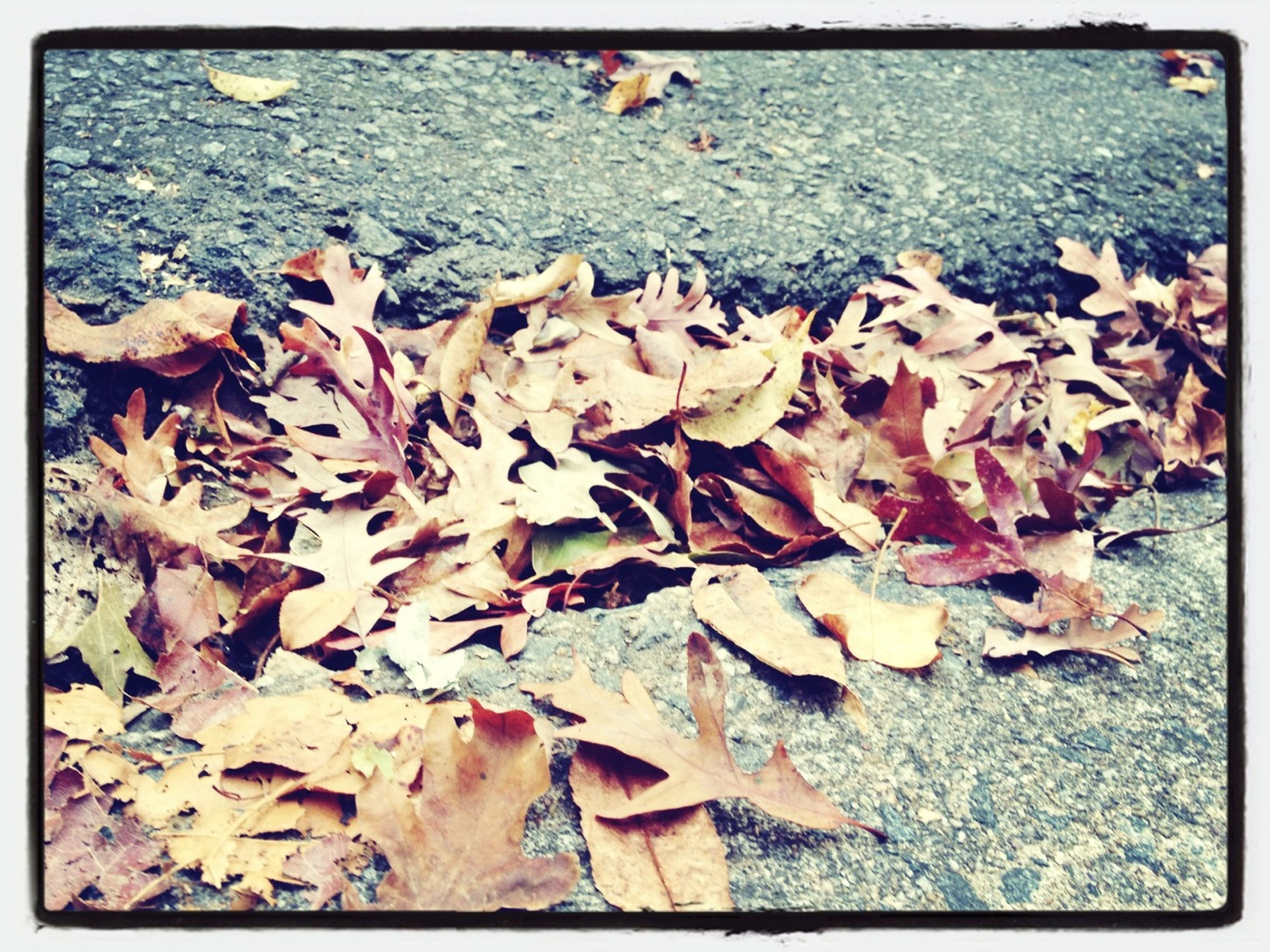 leaf, transfer print, autumn, auto post production filter, leaves, change, dry, fallen, high angle view, nature, season, tranquility, abundance, water, outdoors, day, beauty in nature, pebble, rock - object, beach