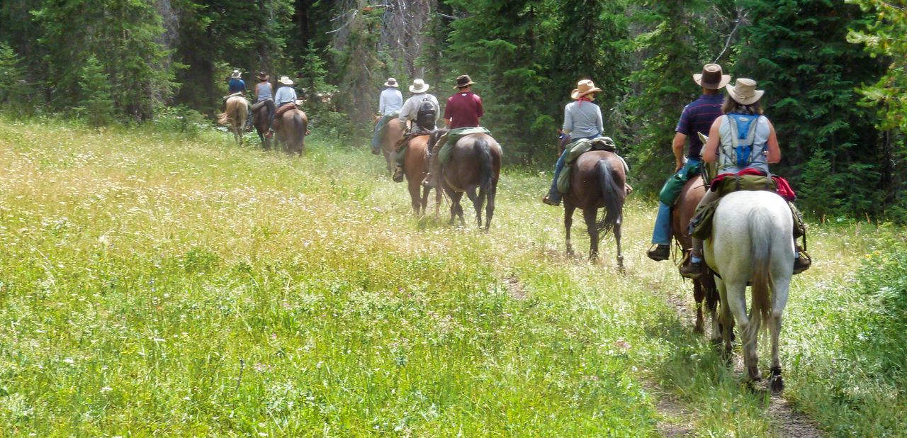 Horse-trekking in Yellowstone National Park - follow the leader National Park Trekking Yellowstone Yellowstone National Park Day Domestic Animals Grass Horse Horse Riding Horse Treking Horseback Riding Livestock Mammal Medium Group Of People Outdoors People Riding Rural Scene Tree