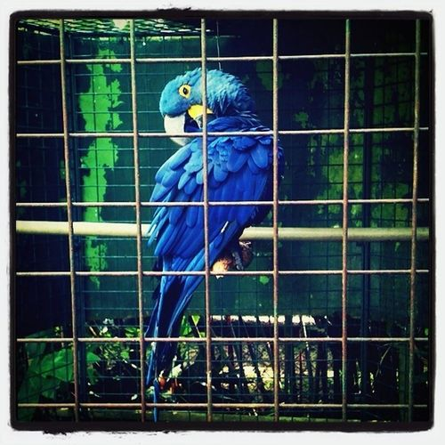 Parrots do not belong in a cage