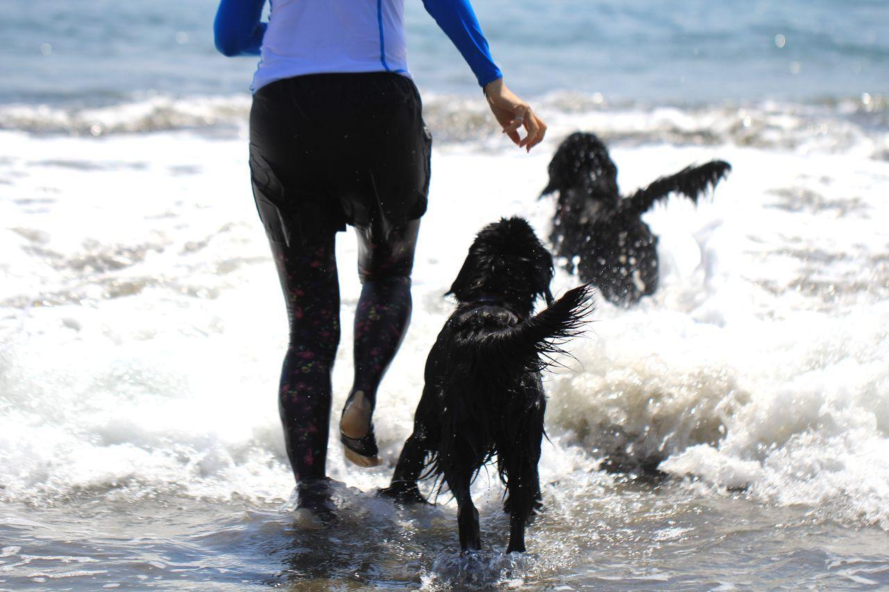 Going The Distance EyeEm Best Shots Oceanside Dogs Funtimes