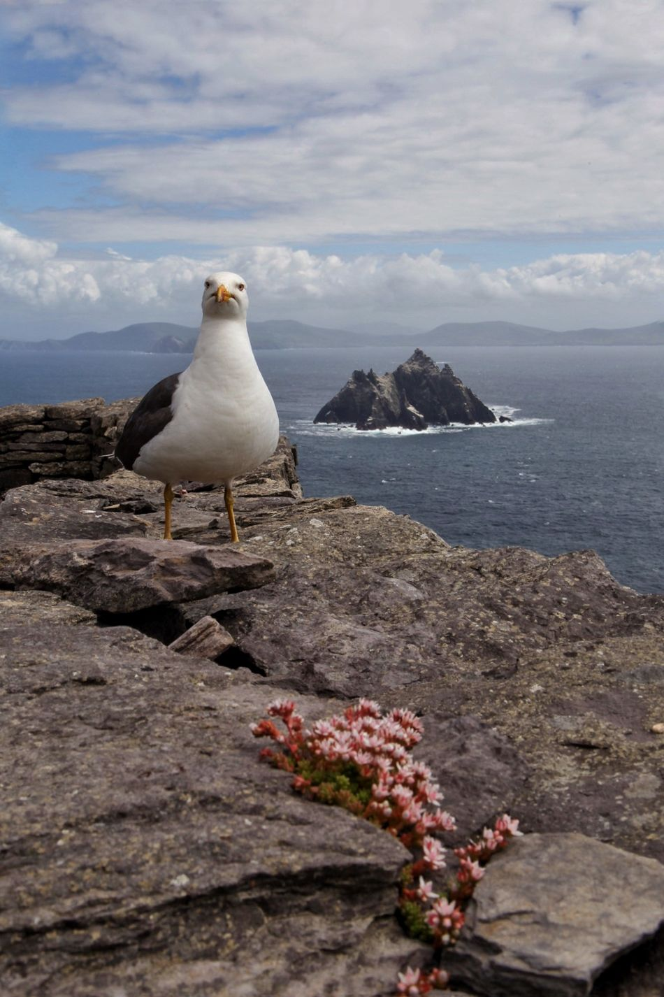 King of the Island Skellig Islands Seagulls Enjoying The View Perspectives The Traveler - 2014 Eyem Awards Nature On Your Doorstep Capture The Moment