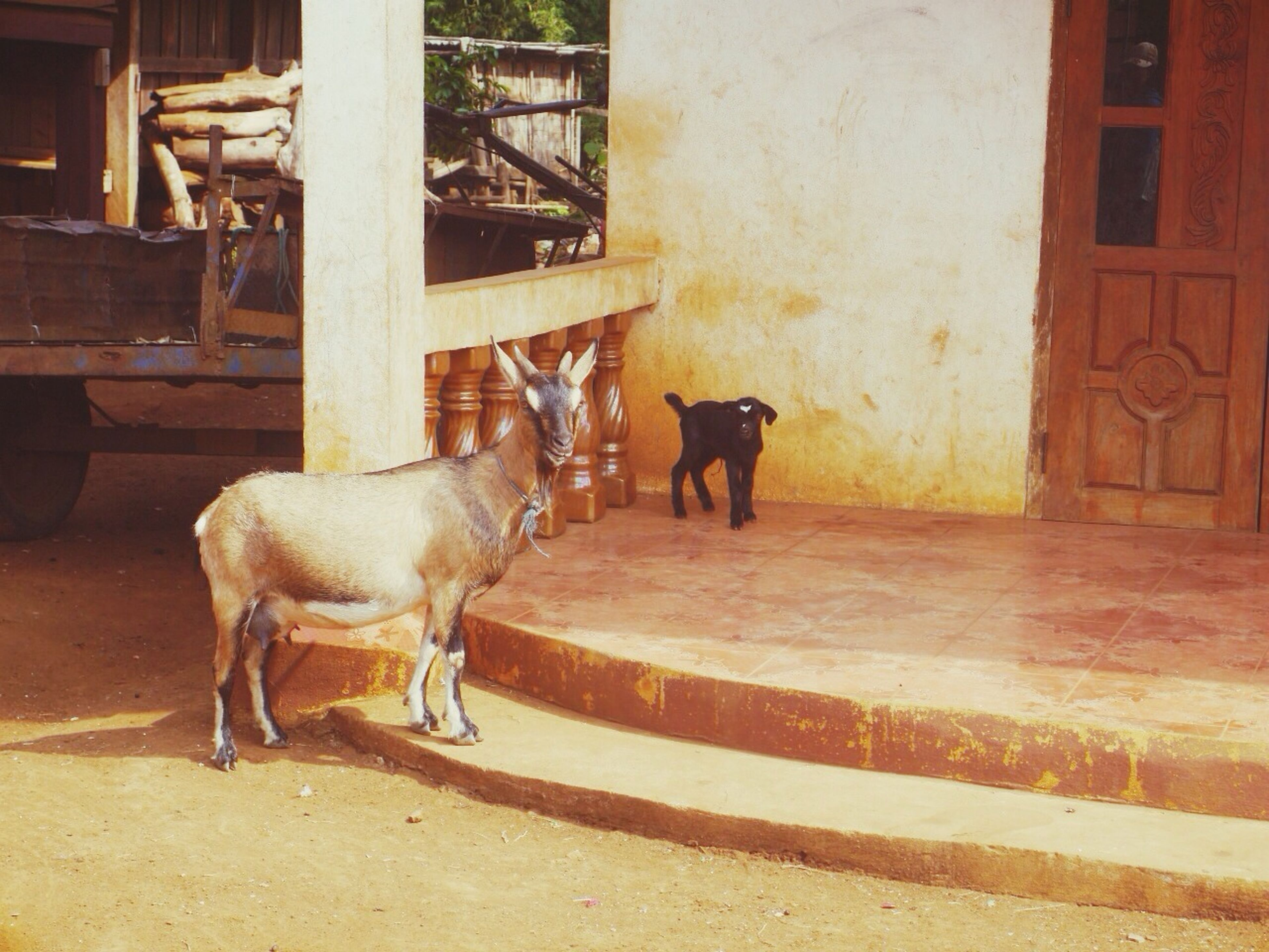 domestic animals, animal themes, mammal, livestock, one animal, horse, built structure, two animals, building exterior, architecture, working animal, standing, herbivorous, pets, full length, side view, day, sunlight, outdoors, dog